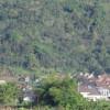 Aforestasi dengan Jati Bisa Berujung Manis