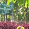 Hutan Kota Garut Nyaris Menyerupai Kerakap Diatas Batu