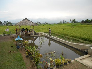 Salah Satu Kampung Komunitas Domba Garut, di Cihampelas, Mekarjkaya, Tarogong Kaler. (Foto: John.
