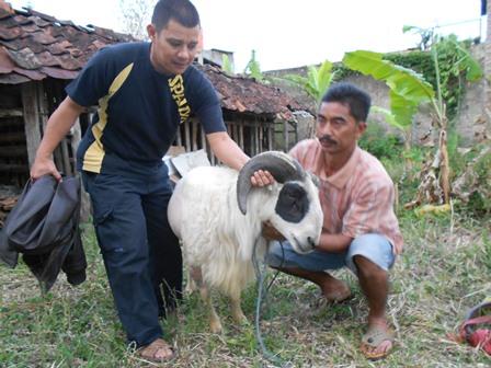 Ilustrasi Syam Sumaryana, SH, MH Siapkan Hewan Untuk Berkurban. (Foto: John).