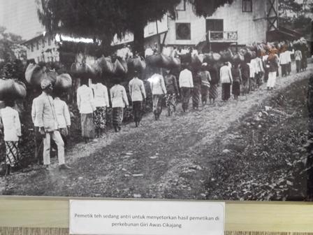 Ilustrasi Nuansa Feodal pada Afdeling Perkebunan Teh. (Foto Repro: John).