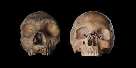 Tengkorak Homo neanderthalensis (kiri), dan tengkorak perempuan modern Homo sapiens. | David Liitschwager/National Geographic