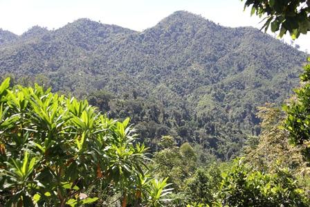 Hamparan Hutan Basah Gunung Halimun.