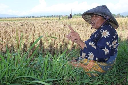 Ilustrasi. Inilah Kondisi Kemiskinan Buruh Tani di Kabupaten Garut, Jawa Barat. (Foto: John Doddy Hidayat).