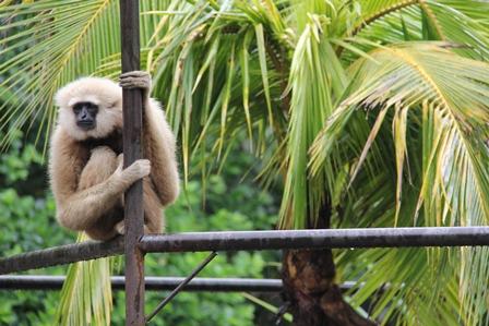 Ilustrasi, Primata Bule Ini, Merenung Bagaikan Gunung Hadapi Tahun Politik 2014.