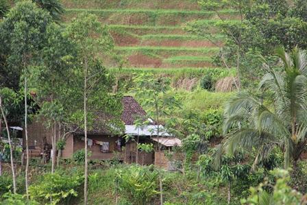 Penduduk Cisewu Juga Banyak Bermukim Pada Titik Lokasi Rawan Lonfsor.