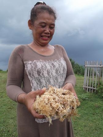 Ilustrasi, Nelayan atawa petani Rumput Laut Pantai Garut Selatan Ini, Barangkali Lebih Mulia Dibanding Ratu Atut. (Foto : John Doddy Hidayat).