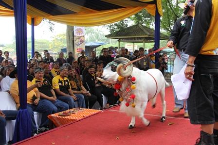 Antara lain Disaksikan Langsung Bupati dan Wakil Bupati Garut, Sabtu (22/02-2014). Foto: John Doddy Hidayat.
