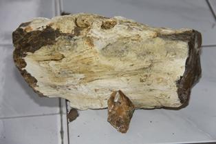 fosil3