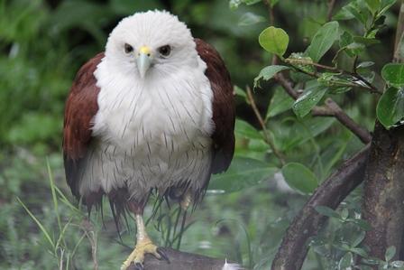 Foto Ilustrasi, Satwa Burung Ini Juga Bisa Cacat. (John DH).