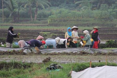 Ilustrasi. Bergotong Royong. (Foto: John Doddy Hidayat).