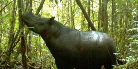 Rudi Putra berusaha menutup perkebunan kepala sawit ilegal di hutan tempat tinggal badak. (Yayasan Leuser Indonesia).