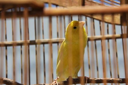 Ilustrasi. Kesunyian Terpenjara yang Mencekam. (Foto : John Doddy Hidayat).