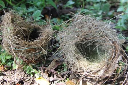 Ilustrasi. Lebih Layak Sarang Anak Burung. (Foto: John Doddy Hidayat).