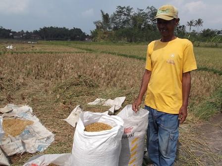 Jajang, Salah Satu Petani Bernasib Terpuruk di Garut, Jelang El Nino.