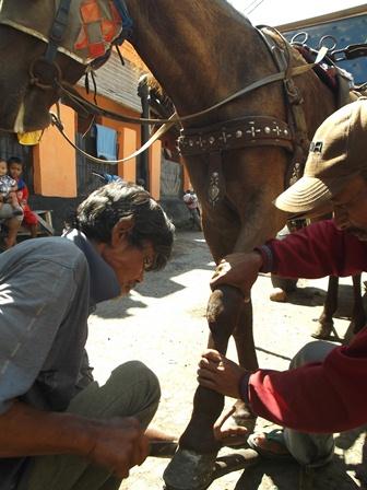 Lantaran Marema Atawa Banyak Diserbu Calon Penumpang, Kuda pun Berganti Sepatu. (Foto : John Doddy Hidayat).