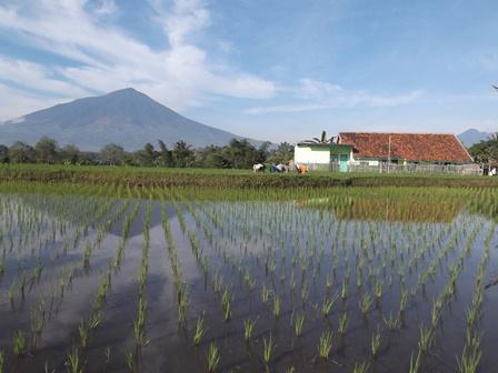 Desa Wisata Berlatar Gunung Papandayan dan Gunungapi Guntur.