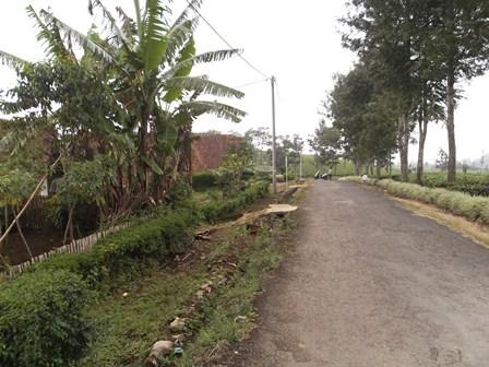 Lintasan Jalan Perkebunan dengan Beragam Potensi SDA Sekitarnya.