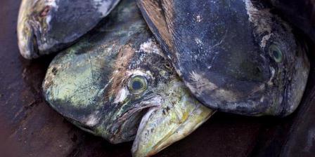 Ikan yang siap diantar diatas becak motor di Pasar Peunayong, Banda Aceh, Nanggroe Aceh Darussalam, Kamis (14/2/2013). Sumber daya laut Indonesia yang melimpah berpotensi menjadi negara eksportir ikan laut kelas dunia. Dibutuhkan komitmen yang kuat dari pemerintah dan pemangku kepentingan lain untuk mengembangkan sektor kelautan dan perikanan secara berkelanjutan. (KOMPAS/AGUS SUSANTO).