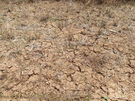 Rumput dan Semak Belukar Juga Tak Bisa Tumbuh. (Foto : John Doddy Hidayat).