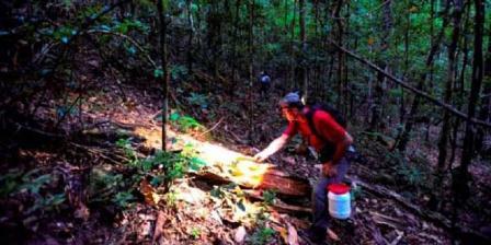 Peneliti mengoleksi spesimen amfibi dan reptilia pada malam hari selama Ekspedisi Lengguru. (Gono Semiadi).
