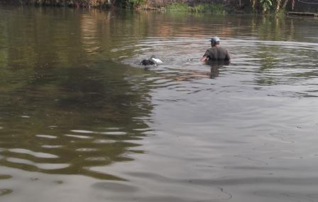 Mahir Berenang Pada Kedalaman Diatas Satu Meter.