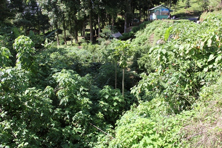 Ilustrasi. Kondisi Hutan di Lokasi DAS Hulu Cimanuk, Garut, Jawa Barat. (Foto : John Doddy Hidayat).