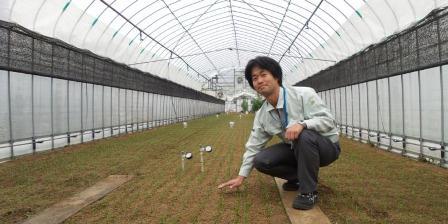 Shingo Nagatomo di dalam rumah kaca menunjukkan benih bayam. (KOMPAS.COM/ LUSIA KUS ANNA).