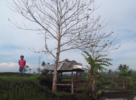 Pohon Terakhir Meranggas dan Kering.