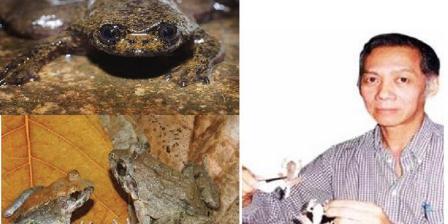 Djoko Tjahjono Iskandar bersama dua spesies temuannya yang menggegerkan dunia, Barbourula kalimantanensis (kiri atas) dan Limnonectes larvaepartus (kiri bawah). Zootaxa/PLOSONE/KOMPAS.