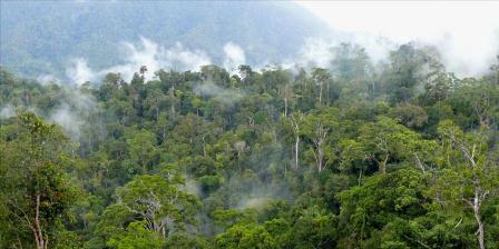 Ilustrasi: hutan di Kalimantan Timur. (Michael Padmanaba for Center for International Forestry Research (CIFOR).