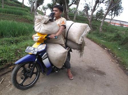 Proses Pengangkutan.