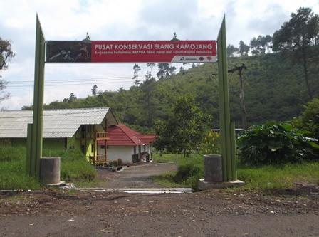 Inilah Pusat Konservasi Elang Kamojang.