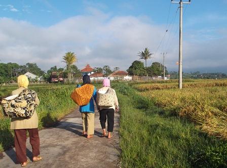 Produktivitas Sawah di Garut Kian Digerus Hama Alih Fungsi Lahan. (Foto : John Doddy Hidayat).