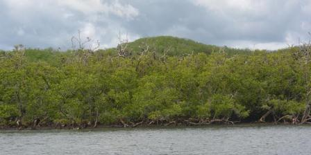 Hutan bakau di Pulau Ontoloe, Taman Wisata Alam 17 Pulau Riung, Kecamatan Riung, Kabupaten Ngada, Pulau Flores, Nusa Tenggara Timur. (KOMPAS.COM/MARKUS MAKUR).