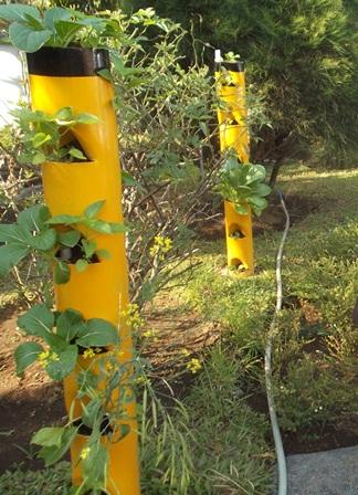 Pada pelataran taman depan rumah dinas Wakil Bupati Garut, dr H. Helmi Budiman, antara lain terdapat deretan tiang pancang minimalis difungsikan sebagai biopori. Keistimewaannya, selain di cat rapi juga dijadikan wahana bertanam sayuran jenis sawi. (Foto : John Doddy Hidayat).