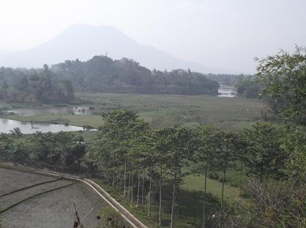 Kampung Pulo Semakin Dikepung Endapan Lumpur serta Ragam Tanaman Liar.
