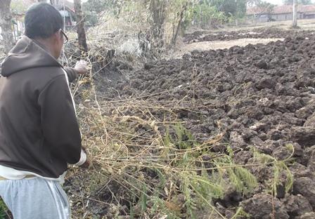 Amir(63), Penduduk Kampung Pulo Sindangsuka Kerap Hanya Bisa Meratapi Areal Persawahaannya Kian Kering Kerontang, Tak Bisa Ditanami Jenis Komoditi Apapun.