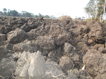 Bongkahan Tanah Diranggas Kekeringan.
