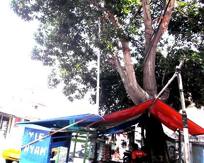 Ilustrasi Banyak Pohon di Kota Garut Semakin Terancam Bahaya.