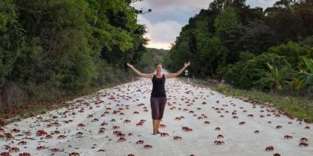 Kepiting merah dan jembatan penyeberang menjadi atraksi menarik bagi turis manca negara. (Kirsty Faulkner).