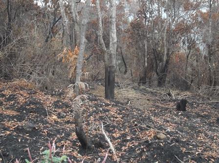 Ilustrasi. Terbakar Atawa Dibakar....? (Foto : John Doddy Hidayat).