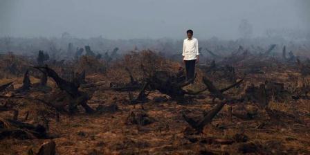 Presiden Joko Widodo berada di tengah area hutan gambut yang rusak dan hangus saat melakukan inspeksi kebakaran hutan di Banjarbaru, Kalimantan Selatan, 23 September 2015. (AFP PHOTO / ROMEO GACAD).