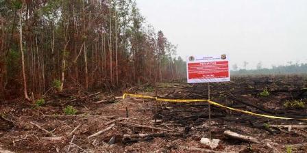 Lahan gambut yang ditanami sawit usai dibakar disegel oleh Kepolisian dan Kementerian Kehutanan dan Lingkungan Hidup (2810/2015). KOMPAS.com / YOHANES KURNIA IRAWAN.