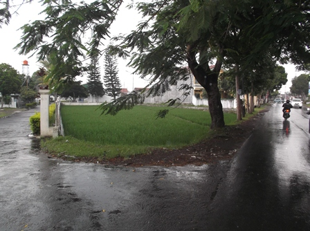 Inilah Fenomena Sepetak Sawah di Garut, Selama Ini Masih bertahan Meski Posisinya Sangat Terjepit Bangunan.