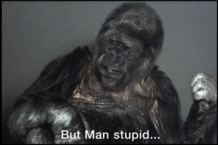 Gorila Koko. (Youtube).