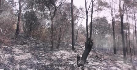 Hamparan Bara Api Dari Hutan Terbakar.