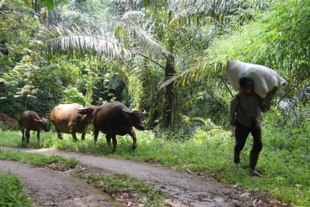 Ilustrasi. Wajah Desa di Garut, Jawa Barat.