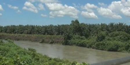 Limbah milik perusahaan pengolahan sawit PT Letawa diduga dibuang dan mengalir hingga mencemari sungai Tike dan sekitranya. (Kompas.com).