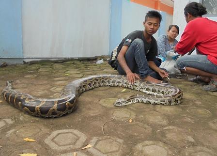 Mengais Rejeki Bersama Reptil.